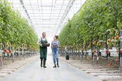 Fazendeiros que discutem ao andar entre plantas na estufa fotografia de stock