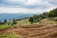 Fazendeiros que plantam batatas nas montanhas de Ruanda perto do parque nacional dos vulcões imagem de stock