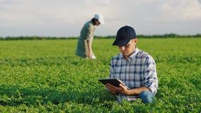 Fazendeiros que trabalham em um campo do grão-de-bico na mola vídeos de arquivo