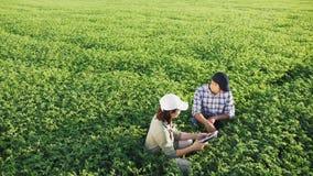 Fazendeiros que trabalham em um campo do grão-de-bico vídeos de arquivo