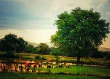 Fazendeiros que trabalham no campo durante o por do sol fotos de stock royalty free