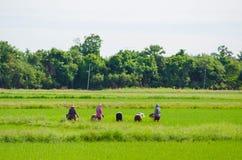 Fazendeiros tailandeses Imagens de Stock Royalty Free