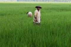 Fazendeiros tradicionais do arroz foto de stock royalty free