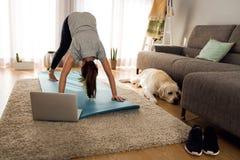 Fazendo o exercício com meu cão preguiçoso Fotografia de Stock