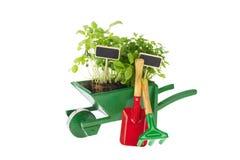 Fazendo um jardim de ervas Fotografia de Stock Royalty Free