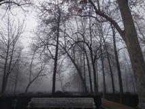 Fazit eines Waldes als Nebelrollen herein stockfoto