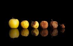 Fazy podgniły żółty jabłko. Zdjęcie Royalty Free