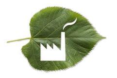 Fábrica cutted en una hoja verde Imagen de archivo libre de regalías