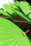 Fábrica del paraguas Foto de archivo libre de regalías