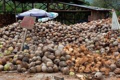 Fábrica local de los cocos Fotografía de archivo libre de regalías