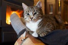 Füße in den Strümpfen mit Katze Stockfoto