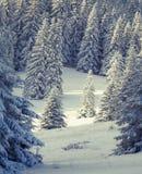 Fe-sagor snowfall royaltyfri fotografi