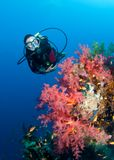 Feamle scuba diver and colourful coral reef Stock Image