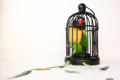 Fear of a closed space concept. A bird Stock Photos
