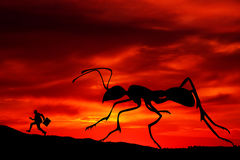Fear. Finding yourself under attack of a giant insect Royalty Free Stock Photo