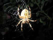 Fear of spiders. Arachnophobia is specific phobia, - it is an abnormal fear of the spider, or any thing that reminds of the spider, such as a network or shapes stock images