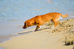Fearful dog facing the waves of the ocean. On the sand at the beach of Malia in Crete royalty free stock photography