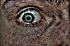Fearful eye. Close up of a green eye with veins Stock Photo