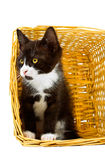 Fearful looking cat in basket Stock Photos