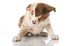 Fearful puppy Stock Photos