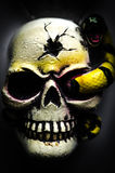 Fearful skull for Halloween Stock Image