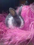 Fearher bunny Royalty Free Stock Photos