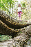 Fearless little girl scout standing on a fallen log in the woods royalty free stock photography