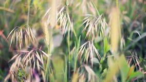 Feaser grass macro Stock Photography