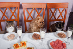 Feast for the animals Stock Images