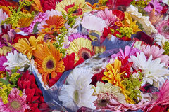 A feast of colorful gerberas Royalty Free Stock Images