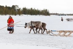 Feast of reindeer herders and fishermans. A woman in national costume accompanies deer sledding royalty free stock photography