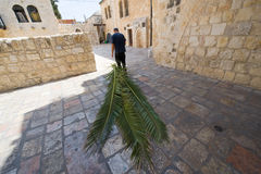 Feast of tabernacles. JERUSALEM, ISRAEL - 08 OCTOBER, 2014: A jewish man is pulling palm leaves with him to prepare for the 'feast of tabernacles' also calle Royalty Free Stock Image