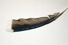 Feather 1 Royalty Free Stock Photography