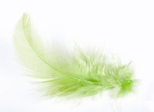 Feather. Exotic soft beautiful feather on white background Royalty Free Stock Photos