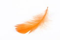 Free Feather Royalty Free Stock Photos - 10972968