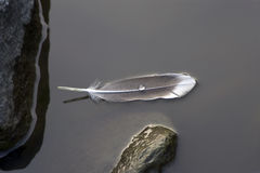 Feather. A feather on the water Royalty Free Stock Photos
