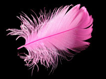 Feather. Pink feather on the black background Royalty Free Stock Image