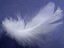 Feather. On blue background Stock Images