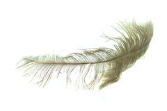 Feather. Stock Photography
