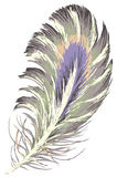 Feather. Drawing of feather in a white background stock illustration