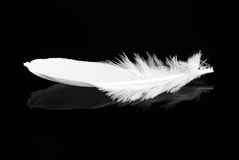 Free Feather Royalty Free Stock Images - 14365239