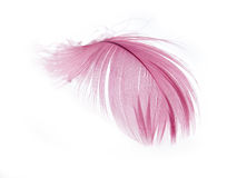 Feather. Pink Feather in soft focus view. Close-Up. With white background - Isolated Stock Photography