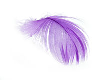 Feather. Violet Feather in soft focus view. Close-Up. With white background - Isolated Stock Photos
