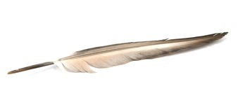 Feather. Is isolated on a white background Stock Photography
