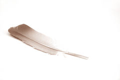 Feather. On white ground Stock Photo