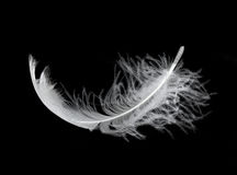 Feather. White feather isolated on white background Stock Image