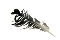 Feather. Uncombed feather of a bird on a white background Royalty Free Stock Photography