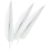 Feather Royalty Free Stock Photos