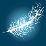 Feather. White feather over blue background Royalty Free Stock Photos