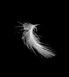 Feather. On a black bg Royalty Free Stock Photography